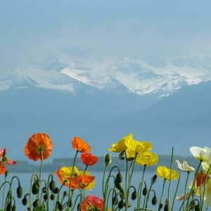 Swizterland-Lake-geneva-Alps-view